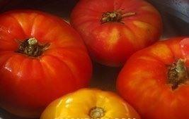 gaspacho pomidory